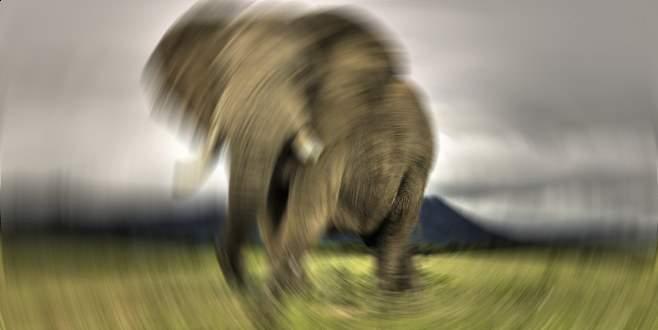 Filin saldırısına uğrayan Çinli öldü