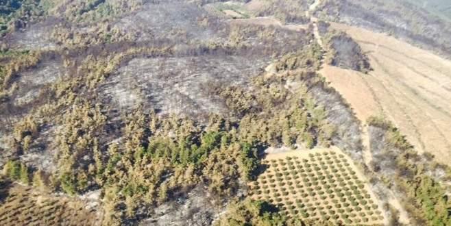 170 hektar alan yanmış