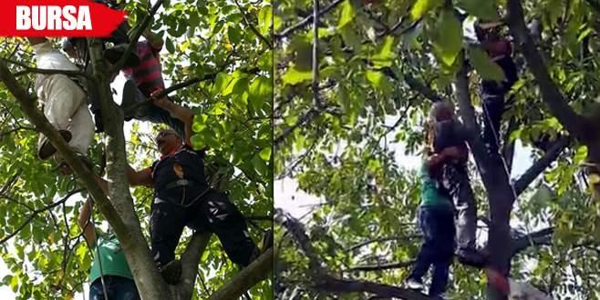 Çıktığı ceviz ağacında bayılınca…