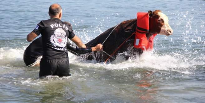 Polisten denizde hayvan kurtarma operasyonu