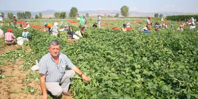 Yenişehirli çiftçi kazançtan memnun