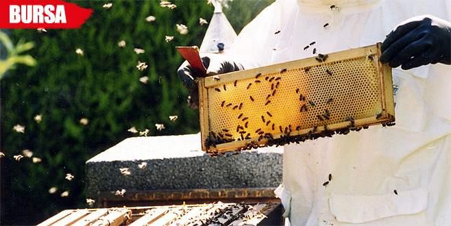 Arı ölümleri devam ederse büyük sıkıntı yaşanacak