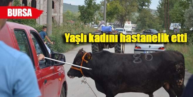 Kurbanlık dana Bursa'yı birbirine kattı!
