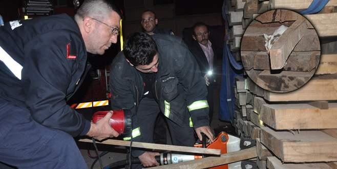 Bursa'da gece yarısı kedi kurtarma operasyonu
