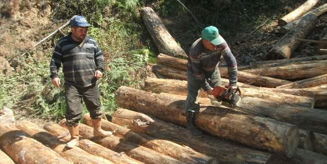 Kırılan ağaçlardan 18 milyon TL gelir
