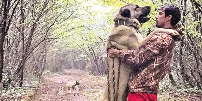 Çelikkol'un dev köpeği