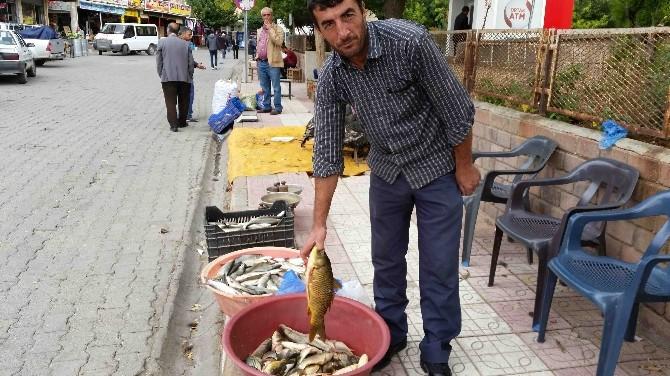 Kulp Balığı Tezgahtaki Yerini Aldı