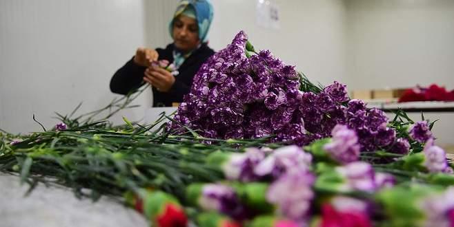 Çiçekçiler erken seçimden umduğunu bulamadı