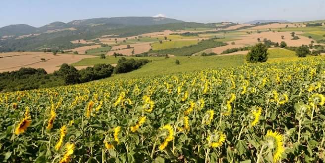 Tarım ÜFE'de yıllık artış yüzde 9