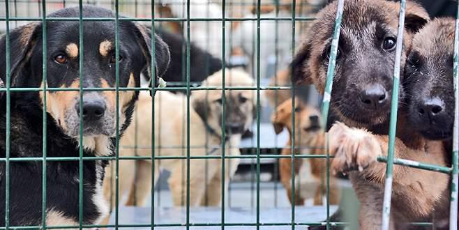 Barınaktaki sakat köpeklere yoğun ilgi