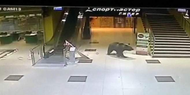 Alışveriş merkezine giren ayı öldürüldü