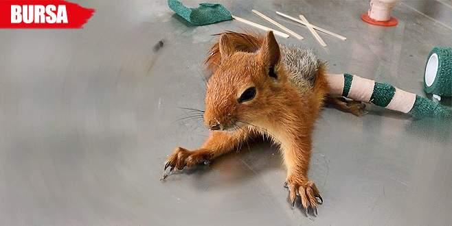 Ceviz ağacından düşüp bacağını kırdı