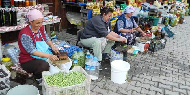 Tirilye'de yeşil zeytin zamanı