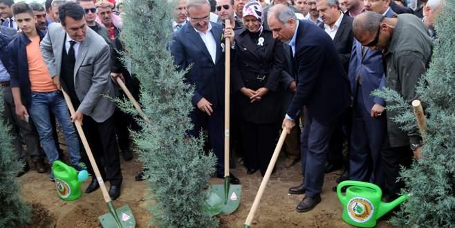 Yanan ormanlık alanın ağaçlandırma çalışması başladı!