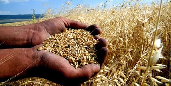Tarıma yüksek kurun maliyeti 10 milyar $