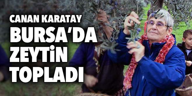 Canan Karatay Bursa'da zeytin topladı