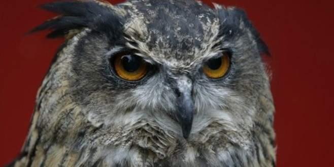 50 kişiye saldıran baykuşa müebbet hapis!