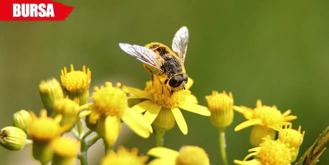 Bu da arı kolonisi dolandırıcılığı!