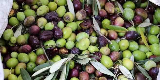 Zeytinyağı üreticisini sevindirdi, tüketicisini üzdü