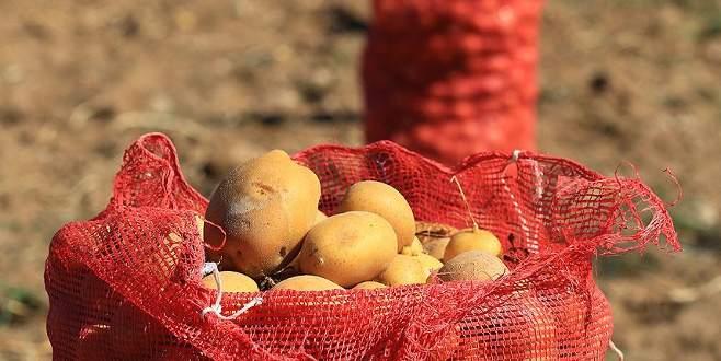 'Patates bu yıl bol ve ucuz olacak'
