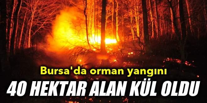 Bursa'da orman yangını: 40 hektar alan kül oldu