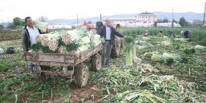 Yenişehirli çiftçinin yağmur sevinci