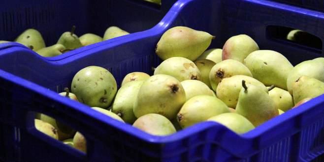 Bursalı meyve üreticisi endişeli