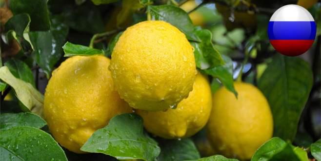 Limon hariç her şey yasak!