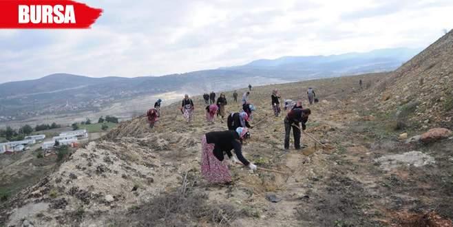 Bursa'da maden sahaları ağaçlandırılıyor!