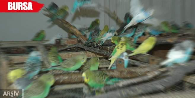 Onlarca muhabbet kuşunun üzücü sonu