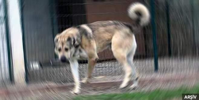 Köpeğine alkol içiren kişiye ceza