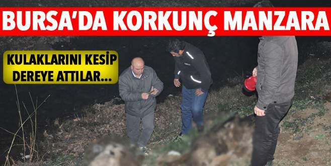 Bursa'da korkunç manzara