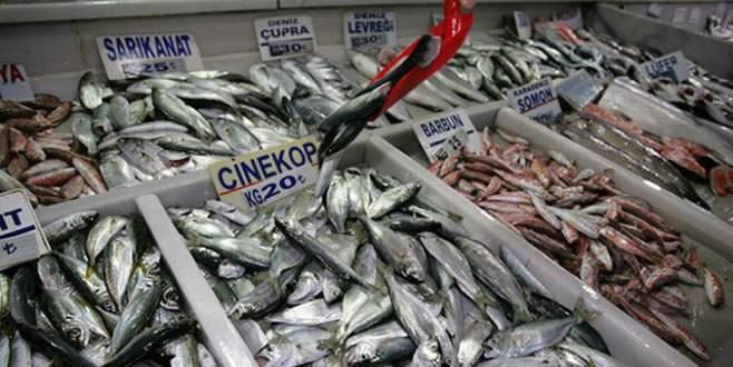 Çinekop balıkçıların yüzünü güldürdü