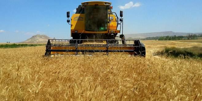 Buğdayda Rusya'ya bağımlı değiliz