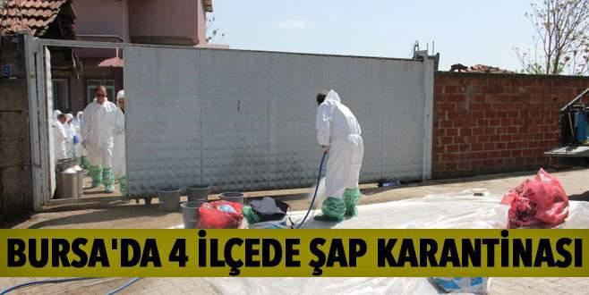 Bursa'da 4 ilçede şap karantinası