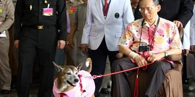 Kral'ın köpeğine hakarete 37 yıl hapis
