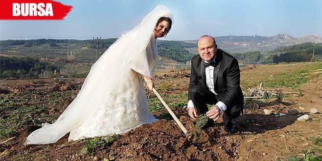 Düğünden önce fidan dikmeye koştular