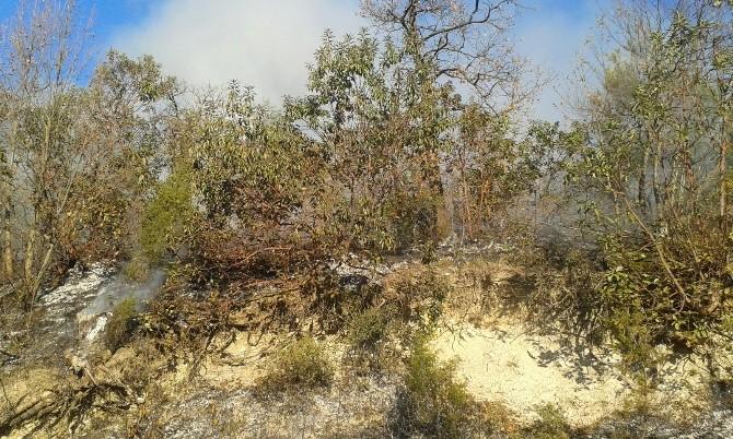 Meşelik Alandaki Yangını Orman İşçileri Söndürdü