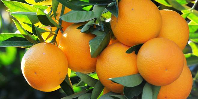 Portakalda % 347,50'lik fiyat farkı
