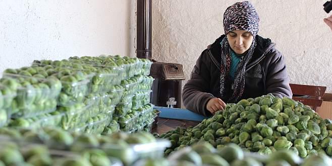 Brüksel lahanasına Rusya darbesi