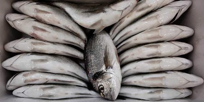 Balık ihracatında antidamping endişesi