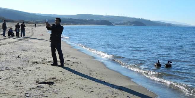 Bursa'da siyah kuğularla 'selfie' keyfi