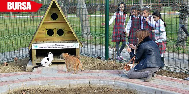 Kediler için 'Pisi Bahçe'