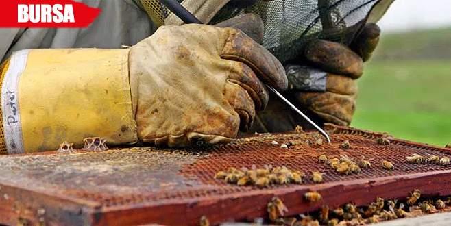 Arılar ölüyor, işte nedeni…