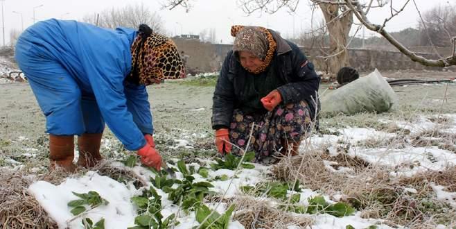 Buzlu tarlalarda ekmek mücadelesi