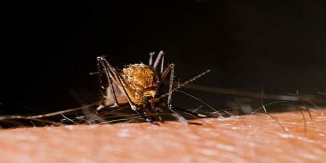 Beş soruda Zika virüsü