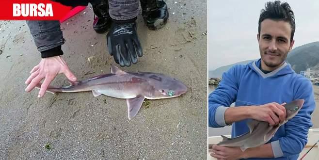 Oltaya takılan köpek balığını görünce şaşkına döndüler