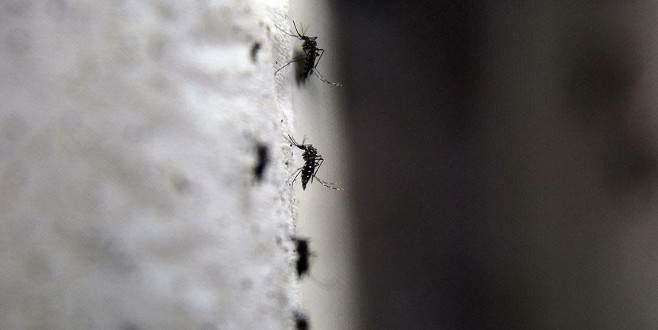 Zika cinsel yolla da bulaşıyor