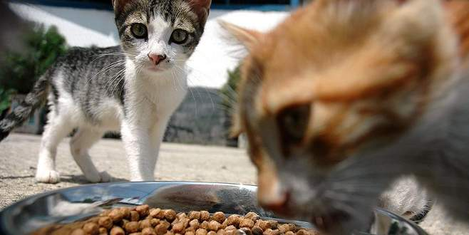 Kedi köpek maması ithalatına 41 milyon dolar