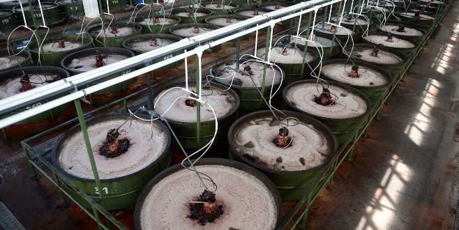 Marmarabirlik saniyede 1160 gram ürün satıyor
